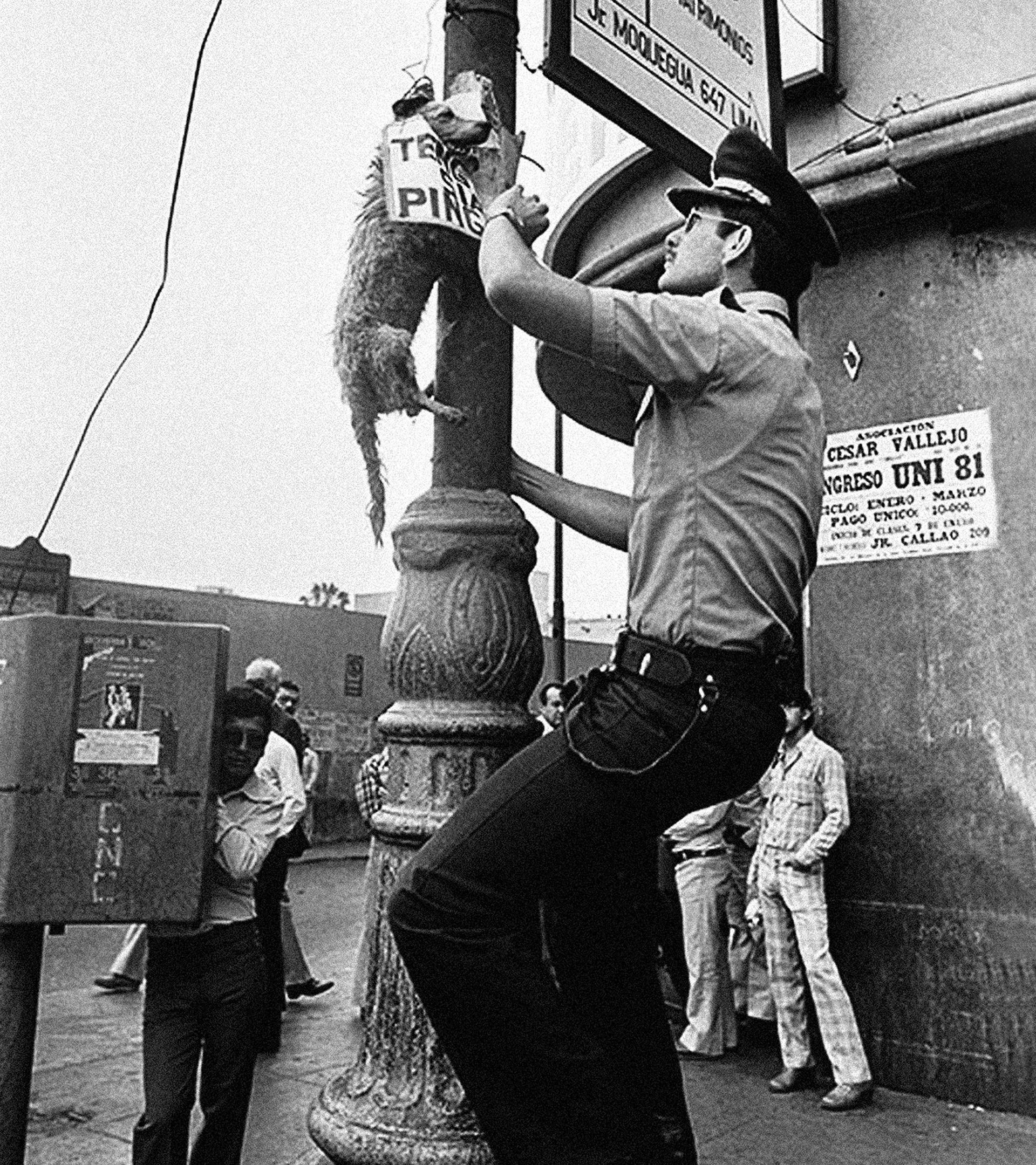 Los perros ahorcados por Sendero Luminoso en diciembre de 1980.