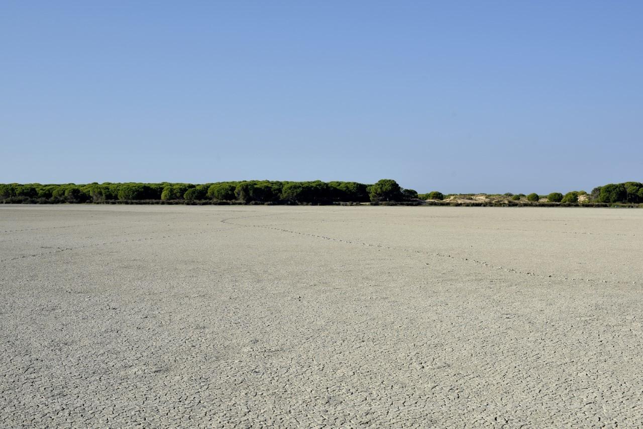 La marisma del Parque de Doñana, seca, hace unas semanas