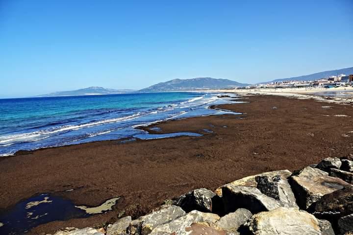 Algas, en la orilla de la playa de Bolonia.