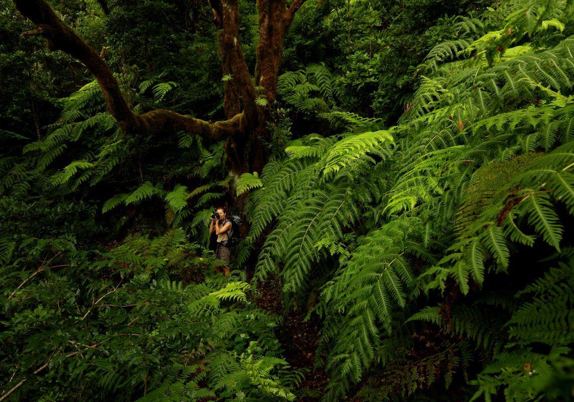 Laurisilvas en el bosque de Anaga.