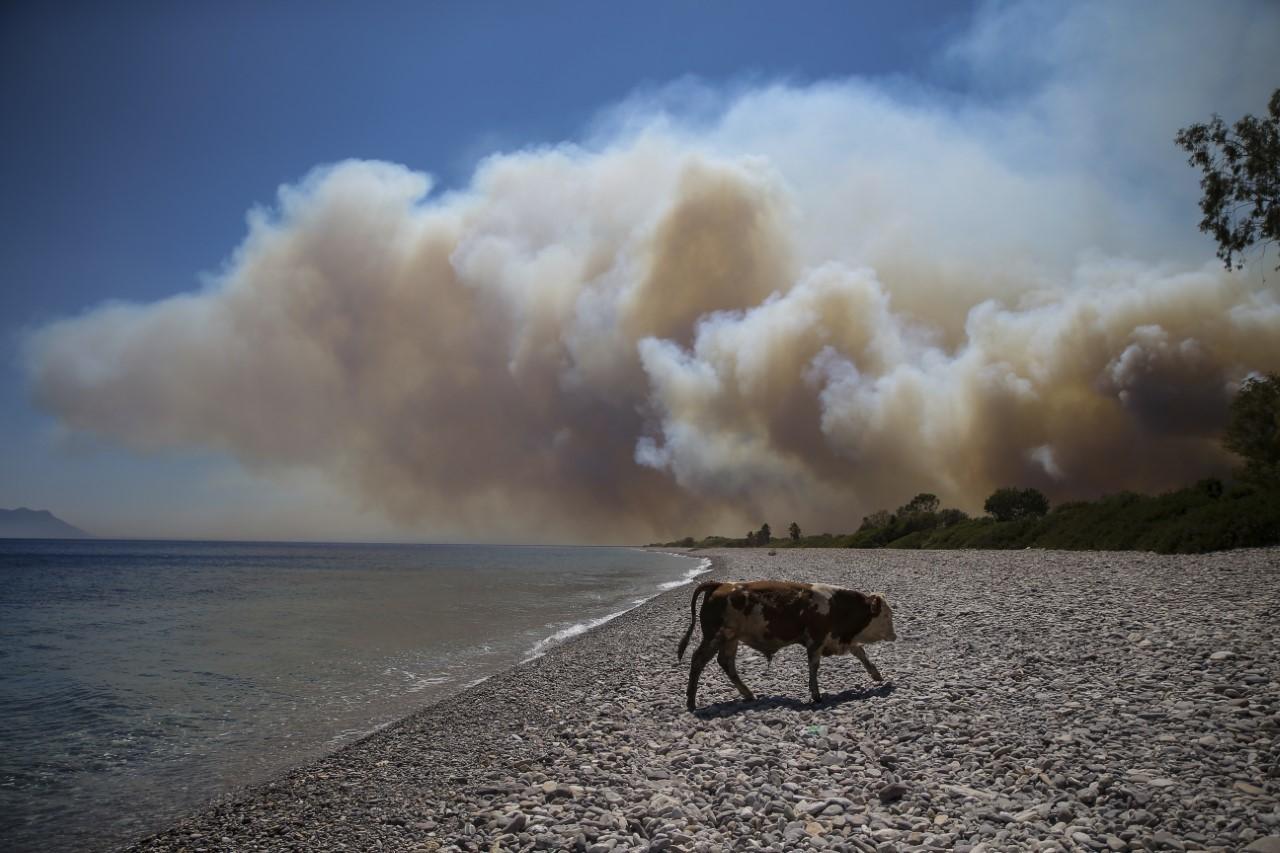 """Los científicos del clima de la ONU: """"El origen humano del cambio climático  es inequívoco e indiscutible""""   Medio Ambiente"""