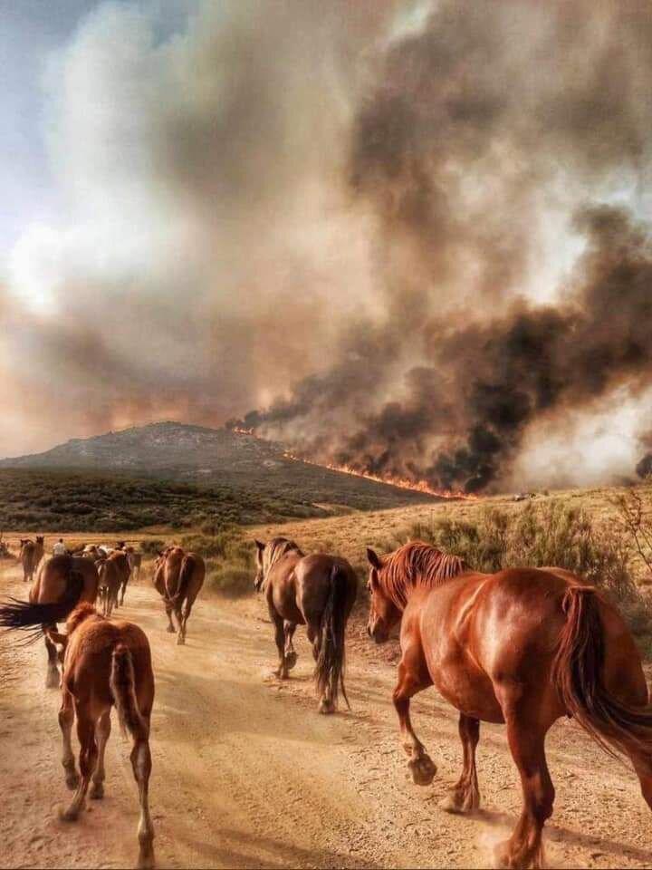 El paso de animales, en las proximidades del incendio.