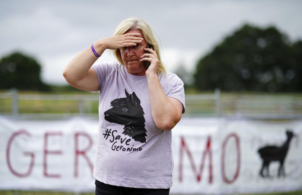 Helen MacDonald, dueña de la alpaca 'Gerónimo'.