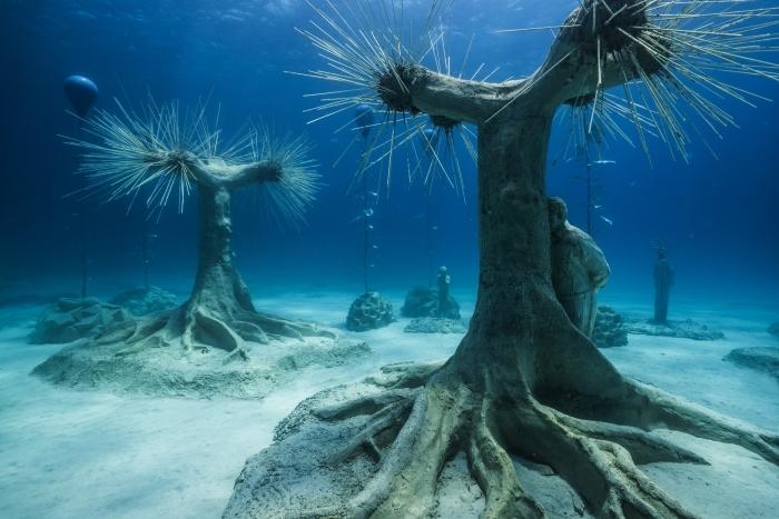 El bosque en el lecho del mar.