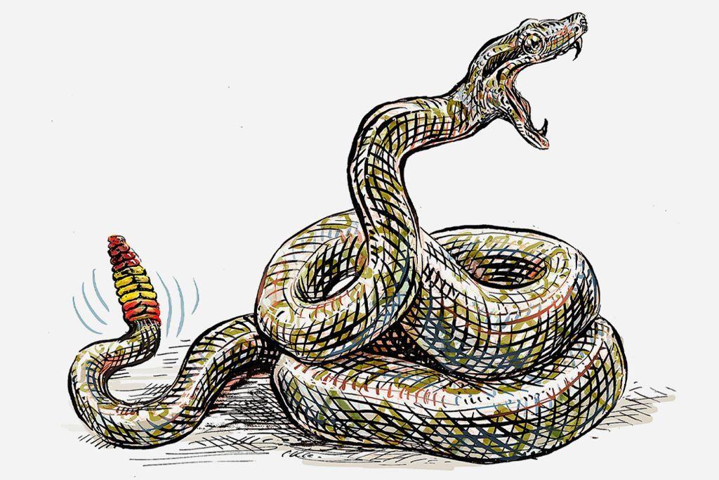 Mordeduras de víboras, por qué España carece de antídoto propio contra ellas