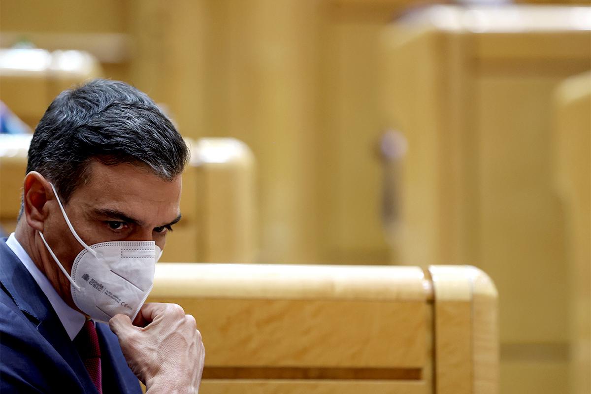 Pedro Sánchez, este martes en el Senado.