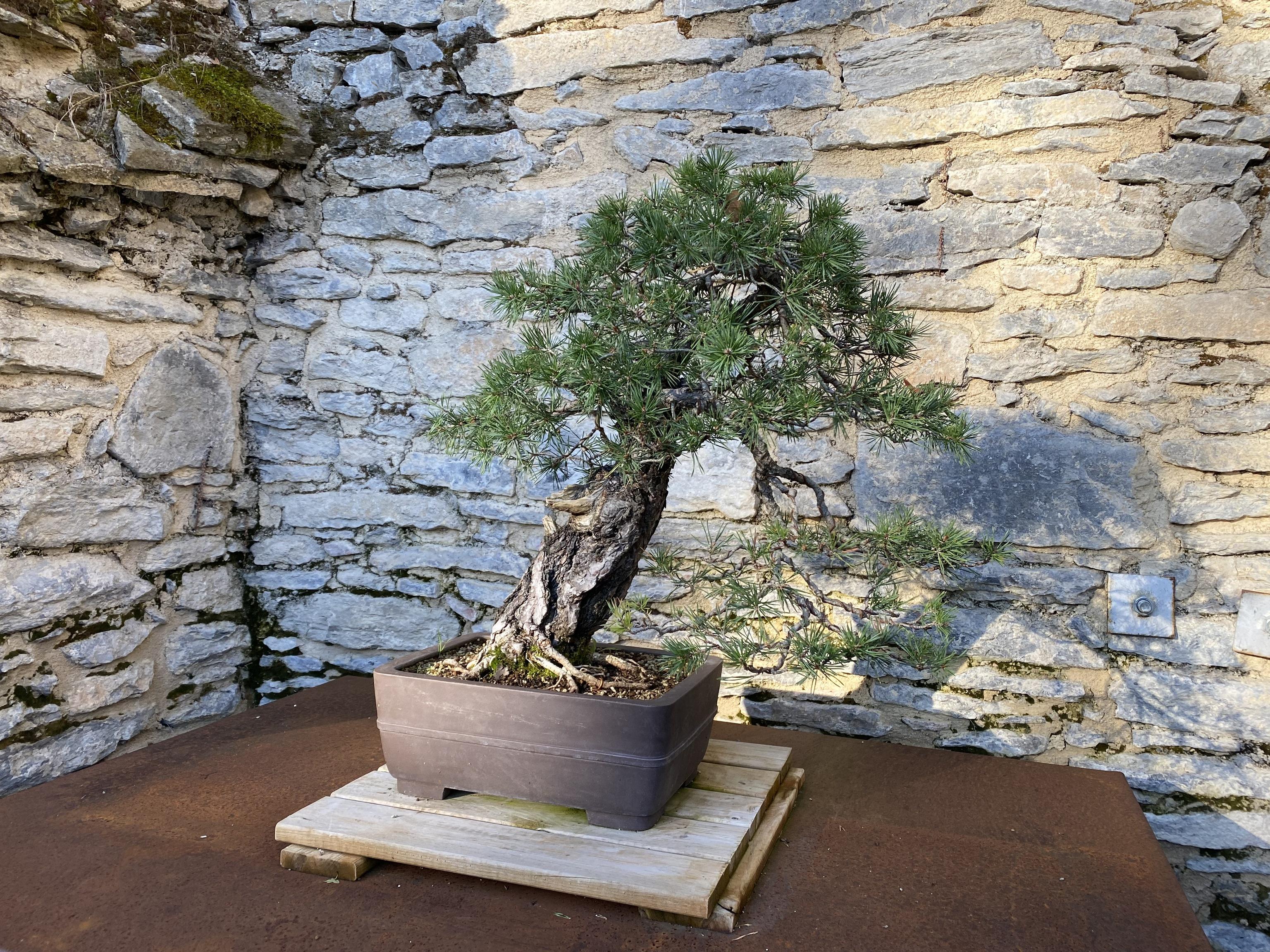 El jardín cuenta con un espacio dedicado a los bonsáis.