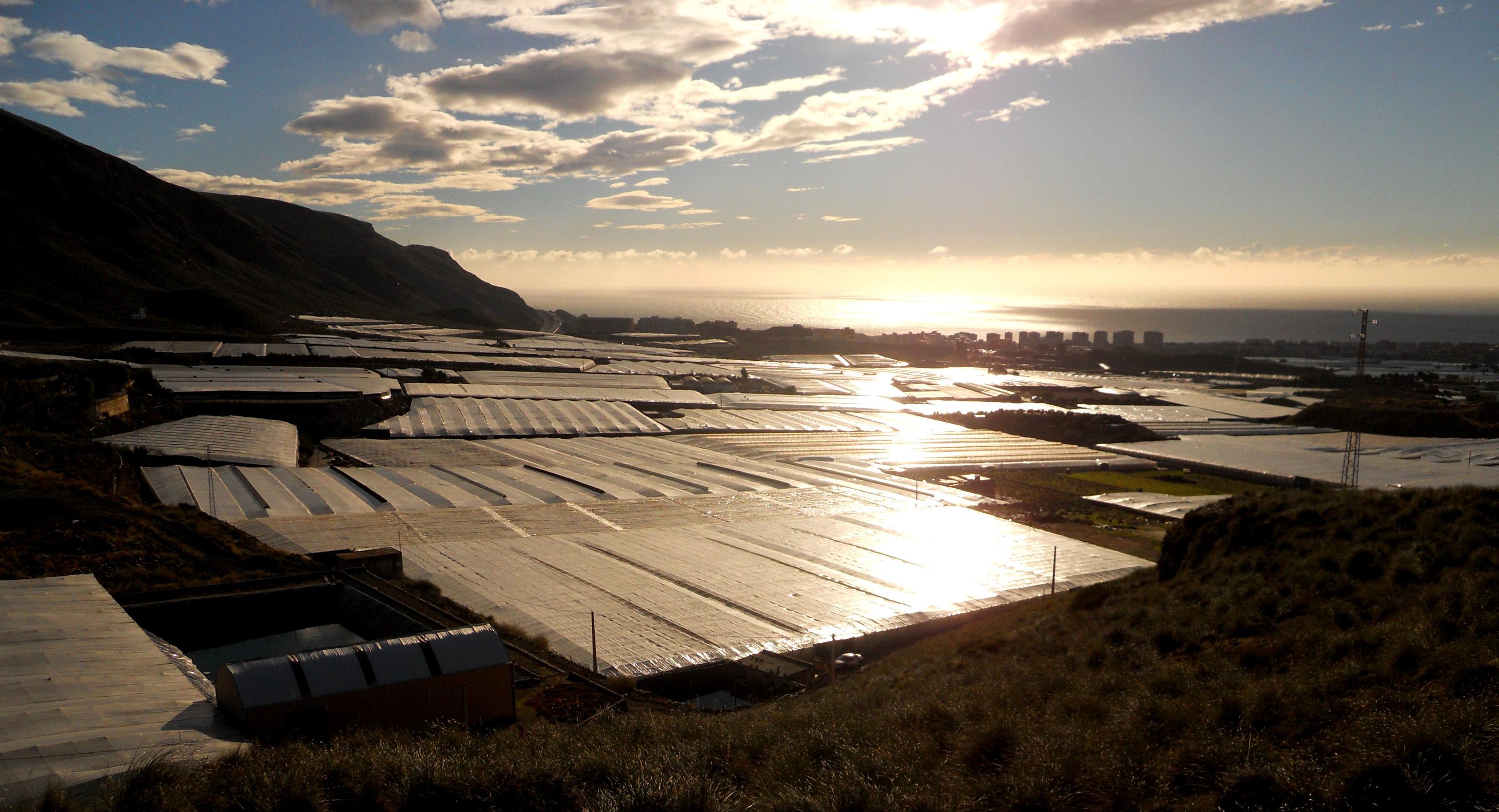 El mar de plástico acelera su revolución: insectos para controlar las plagas y reciclaje de 21.000 toneladas