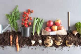 ¿Qué diferencias hay entre eco, bio y orgánico?