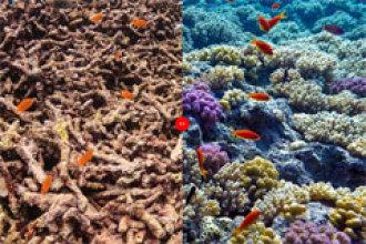 ¿Por qué se están muriendo los corales?
