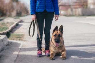 La terapia con perros, una ayuda para víctimas de violencia de género
