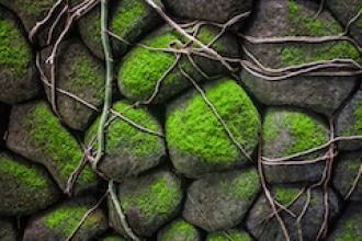 La pintura de musgo, un escudo contra la contaminación