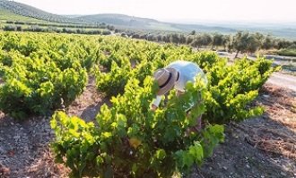 Andalucía se une en cooperativas contra el Covid-19