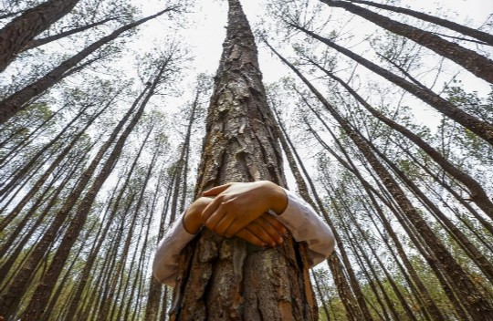 Resultado de imagen para Los 22 beneficios principales de los árboles