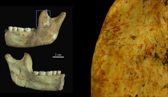 Mandíbula de Homo antecessor