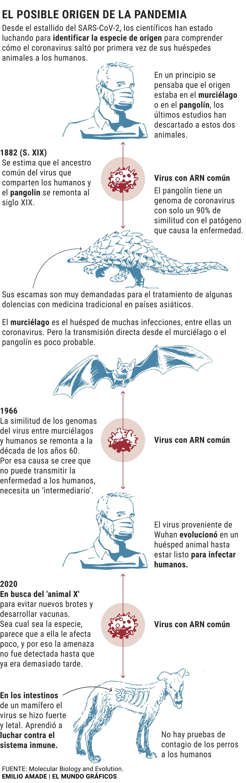 La Genetica Se Acerca Al Animal X Del Que Procede El Coronavirus Ciencia