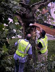 Agentes de la Guardia Civil inspeccionan el árbol donde fue colocado el artefacto de Santander. (EFE)