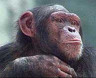 El método ha sido probado en monos. (Foto: BBC)