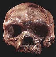 Uno de los cráneos hallados en Herto.
