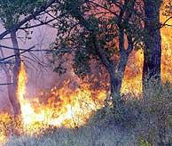 El sistema permitirá detectar un incendio en un radio de 30 kilómetros. (Foto: Eddy Kelele)