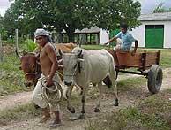 Roraima es el estado con el mayor índice de indígenas. (Manos Unidas)