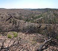 Vegetación, entre los restos calcinados del incendio de Riotinto. (Foto: EFE)