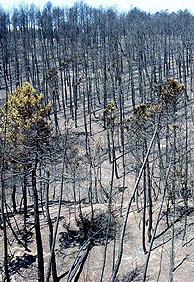 Estado en el que quedó una de las zonas afectadas por el incendio. (Foto: EFE)