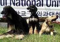 'Snuppy' (centro) entre su padre (izda.), genéticamente idénticos, y su madre. (Foto: Nature)