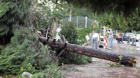 Un árbol debirrado por el tornado en Mollet del Vallès. (Foto: AP)