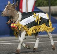 La cabra de la Legión, en el desfile de la Fiesta Nacional. (Foto: El Mundo)