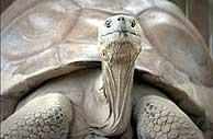 Posiblemente, el animal más viejo del mundo.