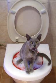 Los gatos pueden ser prisioneros de sus dueños (Foto: REUTERS)
