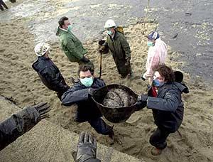 Durante días, miles de voluntarios limpiaron las playas de chapapote. (Foto: ELMUNDO)