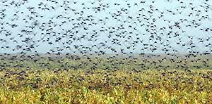 Las aves cruzan el Estrecho para pasar el invierno en África. (Foto: Reuters)