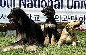 Snuppy (en el centro) junto a sus padres. (Foto: Science)