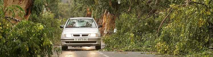 Un coche sortea varios árboles caídos en la carretera que une La Laguna y Tejina, en Tenerife. (Foto: EFE)