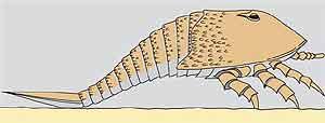 Ilustración de la reconstrucción del gigantesco escorpión. (Foto: Nature)