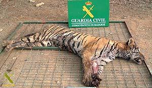 El tigre muerto. (Foto: Ministerio del Interior)