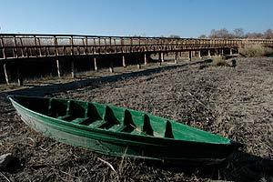 El Parque Nacional de las Tablas de Daimiel pasa por la situación más dramática en la última década debido a la sequía. (Foto: EFE)