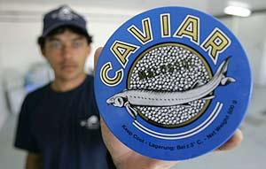 Un empleado de una piscifactoría de esturiones de Uruguay muestra una lata de caviar. (Foto: AP)