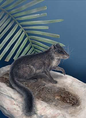 El animal es similar a un ardilla. (Foto: Science)