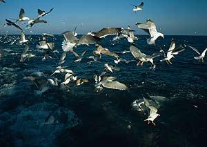 El Delta del Ebro es un paraíso para las aves marinas. (Foto: WWF/Canon.Mike R. JACKSON)