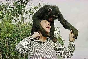 Jane Goodall, una de las científicas que trabajó para National Geographic. (Foto: EL MUNDO)