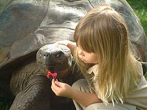'Harriet', con una niña en el zoo. (Foto: Australia Zoo)