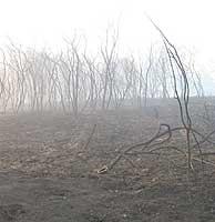 Aspecto fantasmagórico de un terreno de Bertramiráns (La Coruña) tras un incendio. (Foto: M.J. Llerena)