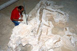 Un operario trabaja en el fósil del árbol. (Foto: EFE)