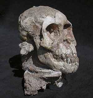 El cráneo de la niña. (Foto: National Geographic)