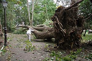 Un árbol arrancado en el parque de Rosalía de Castro, en Lugo. (Foto: EFE)