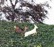 El diario 'Bild' publica una foto del ciervo . (Foto: Bild)