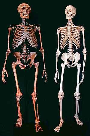 A la izquierda, un esqueleto de neandertal; a la derecha, uno de humano actual. (Foto: Nature)